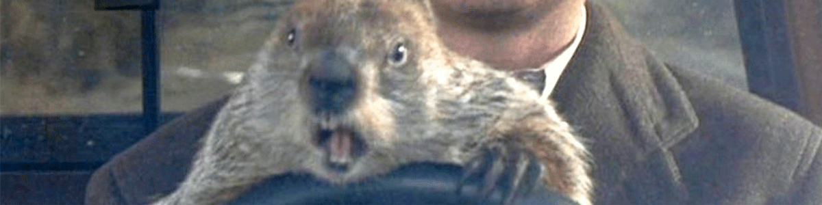 picture of a groundhog